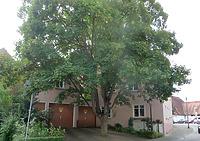 Ansicht von Norden / Wohnhaus in 74354 Besigheim (26.07.2016 - M. Haußmann)