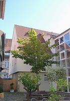 """Westseite nach der Sanierung """"Im Schlosshof"""" / Wohnhaus in 74354 Besigheim (23.09.2016 - M.Haußmann)"""